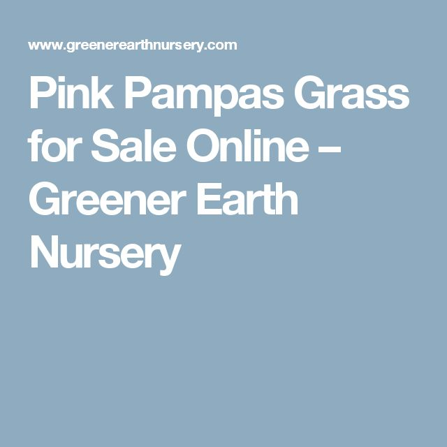 Pink Pampas Grass for Sale Online – Greener Earth Nursery