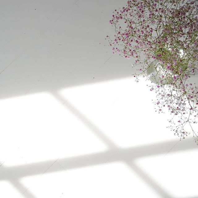 Good morning! Flowers and light🌸