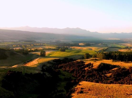 Elevation Vineyard, by Isabel Estate. Waihopi Valley Marlborough. 1000ft ab sea level.