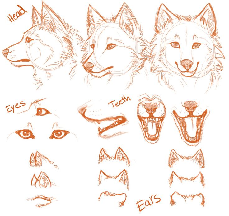 51 best Drawing ideas (wolves) images on Pinterest | Animal anatomy ...