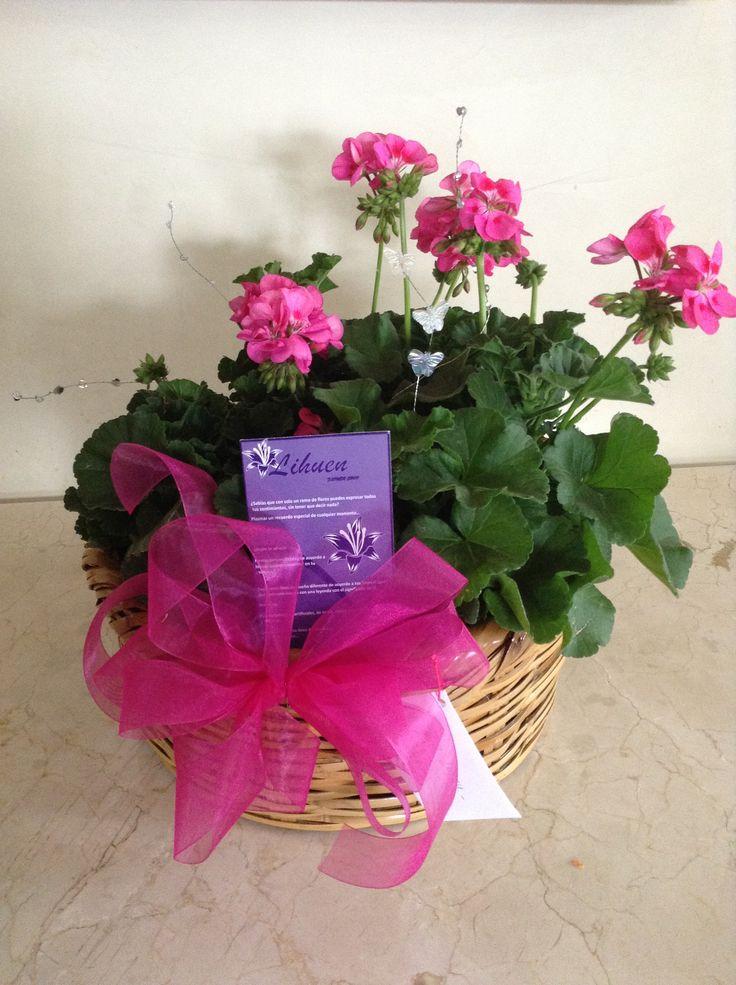 Flores del signo Aries: rosas rojas, tulipanes, Amarilis, caléndula, madre selvas, lilis, amapolas, geranios, margaritas y azucenas.