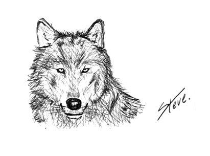 ©®eªRtEmUndOs: Canis Lupus