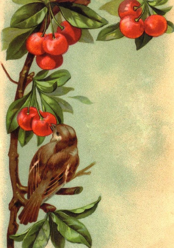 Vintage image bird with cherries greeting or birthday card, $3.00