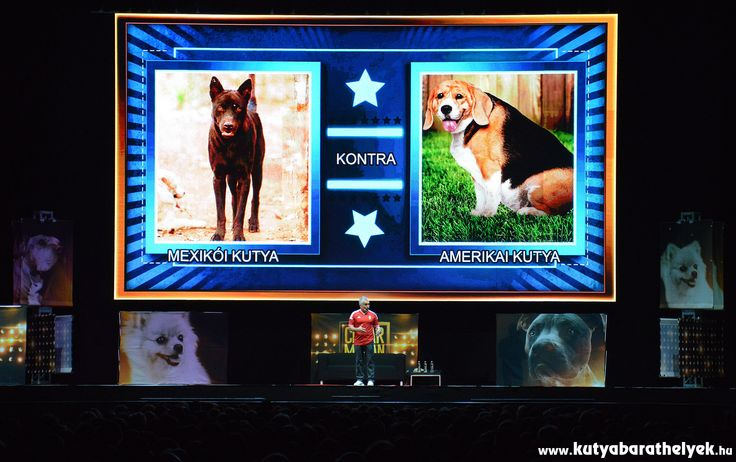Cesar Millan Live Budapest - Mexikói vs. amerikai kutyák