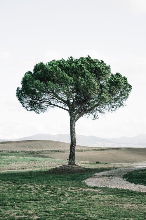 Download Free Wallpapers Mobile Desktop Unsplash Background Images Nature Nature Images