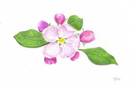 Apple Blossom Original Colored Pencil Drawing Illustration