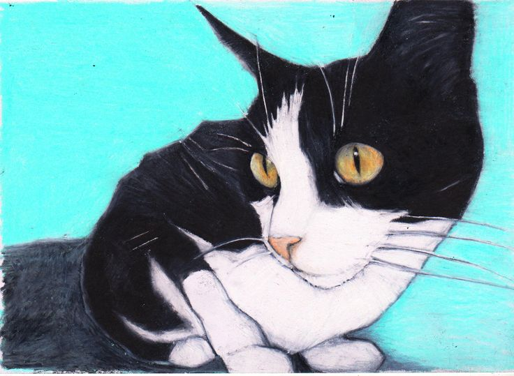 Cat Art. Custom colour pencil drawing of Widget the Cat. https://www.etsy.com/listing/216347712/custom-pet-portrait-by-jim-griffiths?ref=related-0 #Cats #Cat drawig