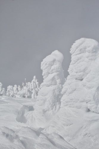 Snow monsters, Zao Onsen, Yamagata, North East Japan