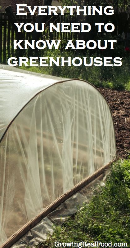 Everything You Need To Know About Greenhouses | GrowingRealFood.com