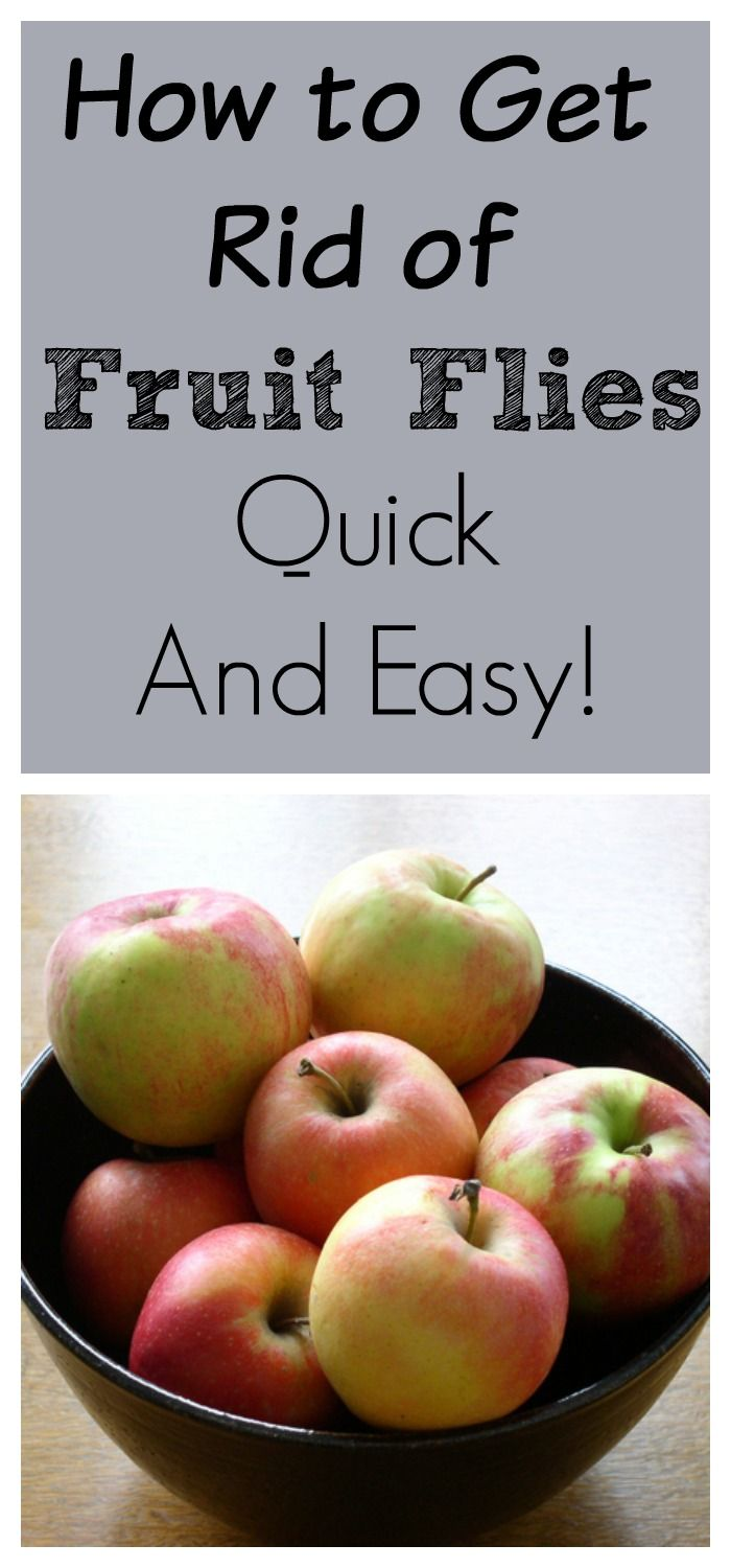 is eating just fruit healthy how to get rid of fruit flies and gnats