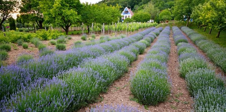 Home | Catherine's vineyard cottages