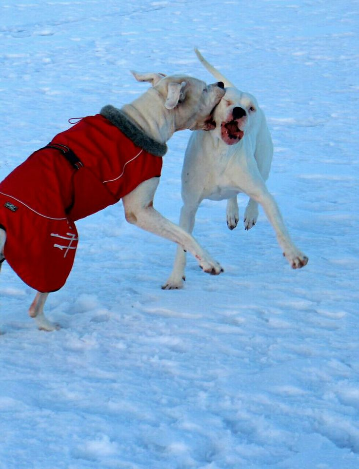 Ma Dogos playing on The ice lake 😂😂😘