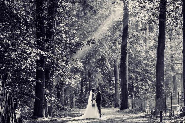 Credit: Serge Smulders Fotografie - volk, monochroom, boom (plant), volwassen, geen persoon, landschap, hout, een