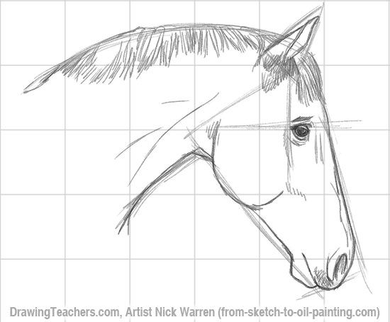 Easy Realistic Drawings Of Horses