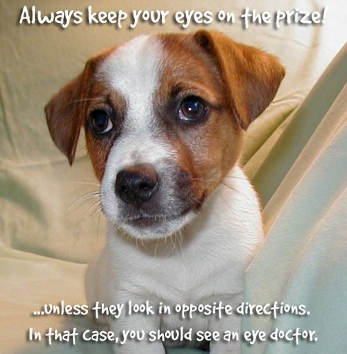 Inspirational images with dogs Google Search Puppies