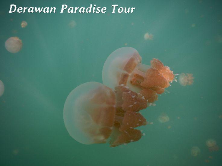 DERAWAN PARADISE TOUR