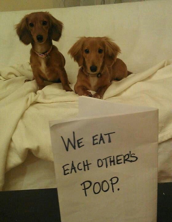 17 Best Images About Dog Shaming On Pinterest My Mom