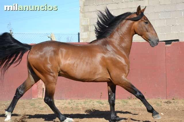 MIL ANUNCIOS.COM - Yeguada rosas. Compra venta de caballos yeguada rosas. Anuncios con fotos de caballos. Comprar un caballo. Todas las razas de caballos.