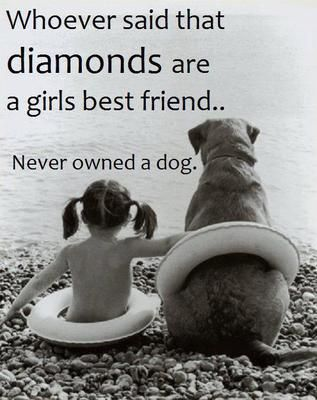 The slogan says it all! Dogs are more valuable...