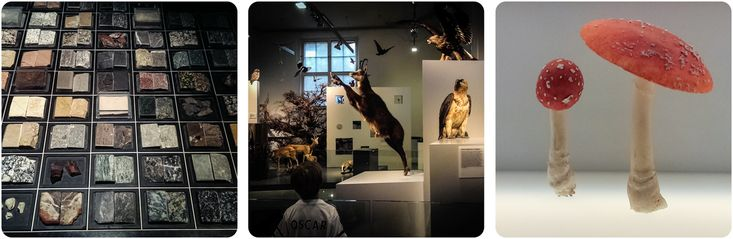Winterthur Natural History Museum