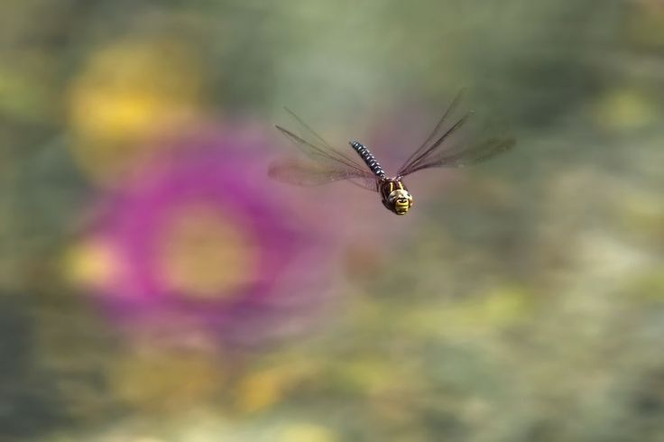 Who knew dragonflies had such smiley faces?  Taken with the Nikon 80-400.