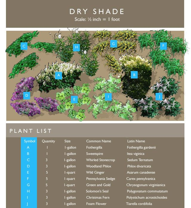 69 best Garden borderpt shadeevergreen images on Pinterest