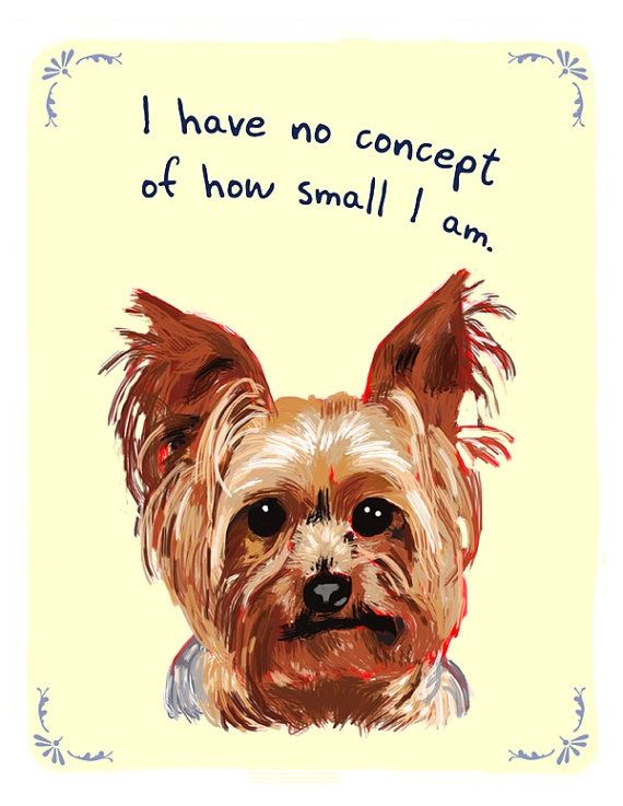 My yorkie all the way