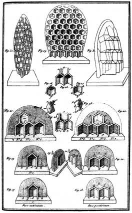 The architecture of beehives, as portrayed in François Hubers Nouvelles observations sur les abeilles, 1814. http://www.cabinetmagazine.org/issues/23/cheng.php