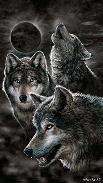 ONE WOLF MOVES, ANOTHER LOOKS LIKE HE IS HOWLING, AND THE SKY MOVES TO.