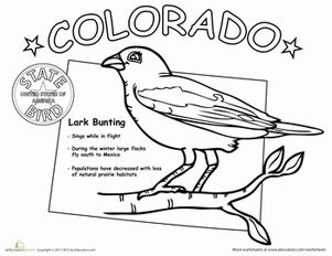 us state bird coloring pages educationcom