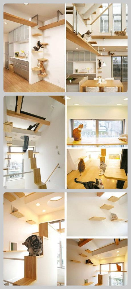 The house designed for cats... A bit extreme but cool ideas I wish they had like a little playground for me when i was a kid in my house would have bean so awesome !!!!
