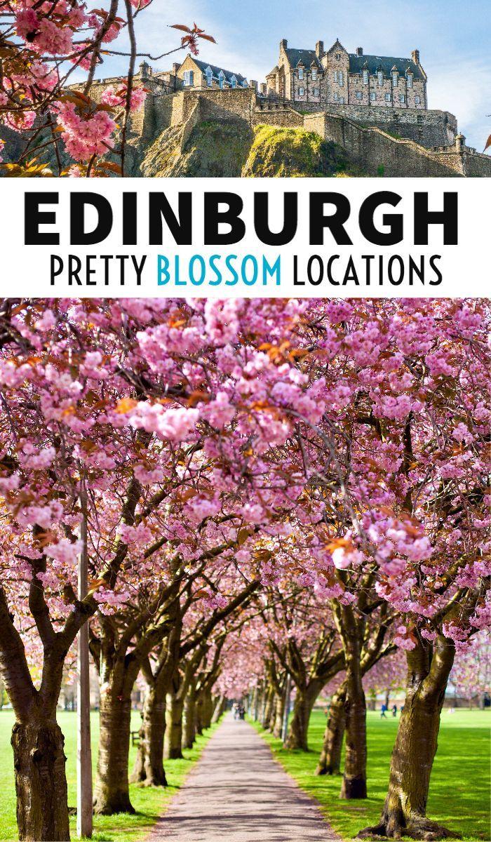 10 Spots To See Cherry Blossom Trees In Edinburgh Edinburgh Travel Scotland Travel Guide Europe Travel Tips