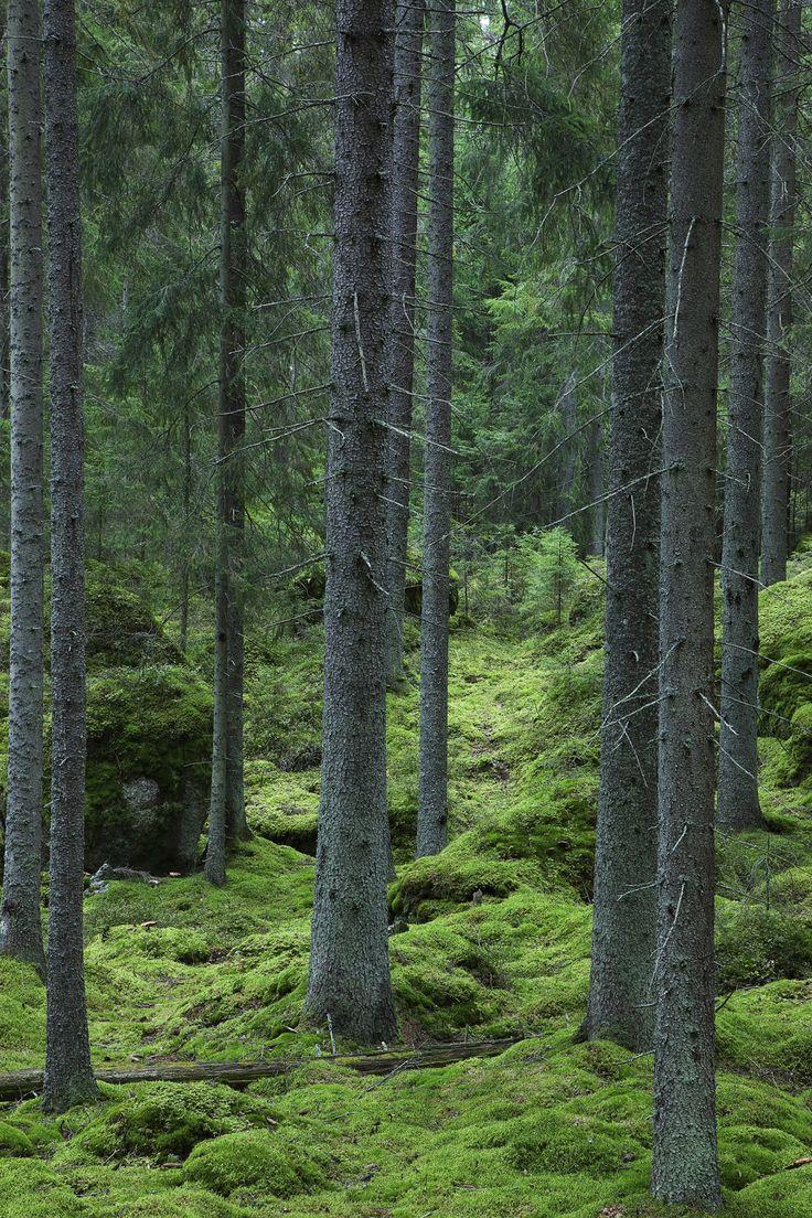 Woodland Path - Fototapeter & Tapeter - Photowall