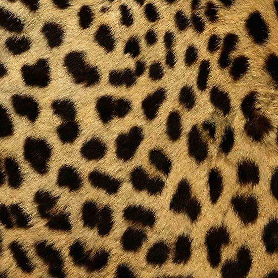 Cheetah Print, Pattern, Print Patterns