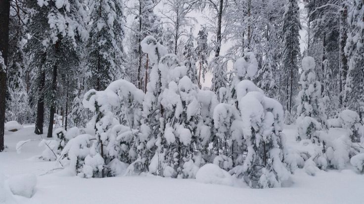 Basic winter view near home in south east Finland Feb 2015.