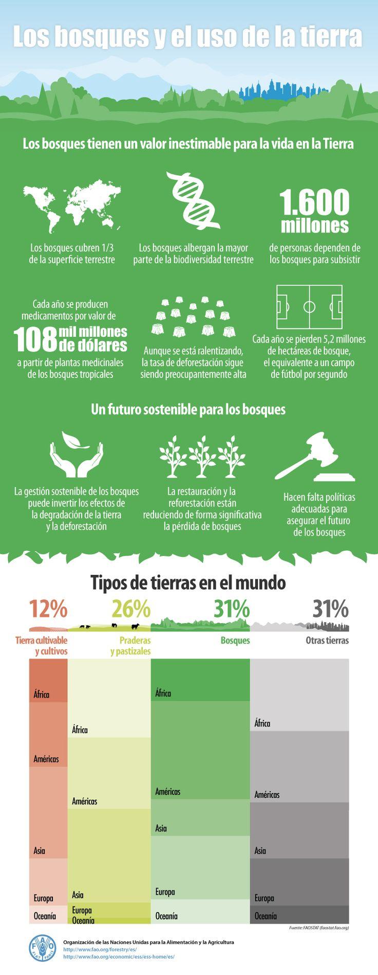 Los bosques y el uso de la tierra [infografia]