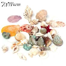 Chegada nova Mixed Estilo Mediterrâneo Conchas Conchas Do Mar Praia Conchas naturais Artesanato combinações aleatórias(China (Mainland))