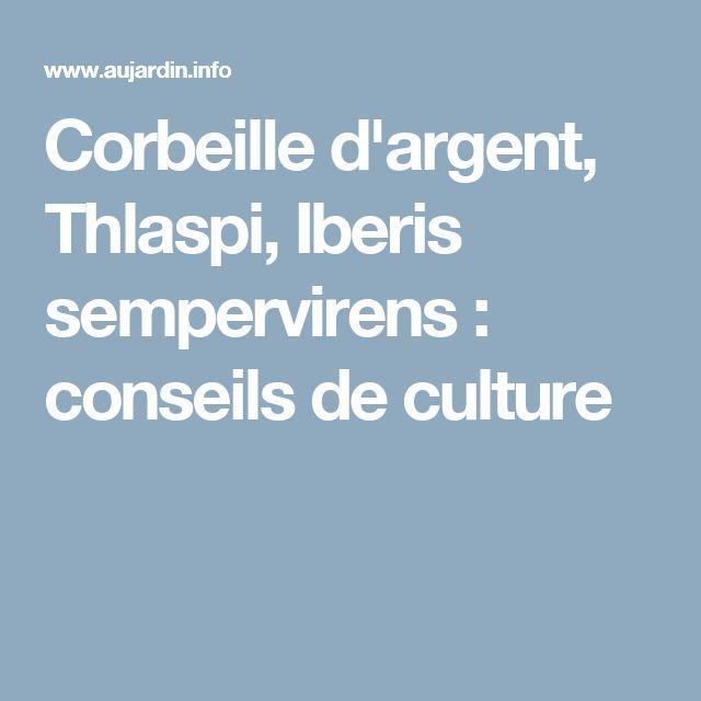 Corbeille d'argent, Thlaspi, Iberis sempervirens : conseils de culture