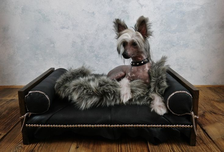 Handmade leather dog bed - Rock Star by ooMelampus on Etsy