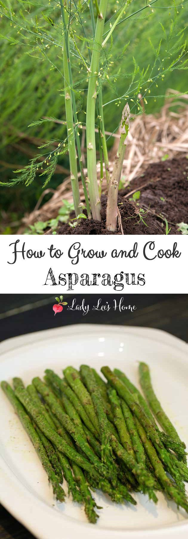 Asparagus Is A Perennial That Once Established In The Garden Will Produce  For Many Years,