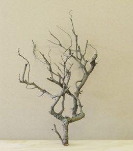 Twig (Home Beautiful Series) 2005
