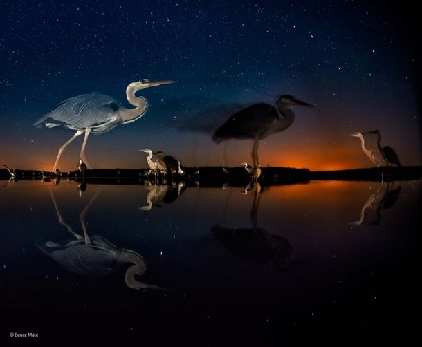 Best Photos 2014: 8. Herons in Time and Space by Bence Máté