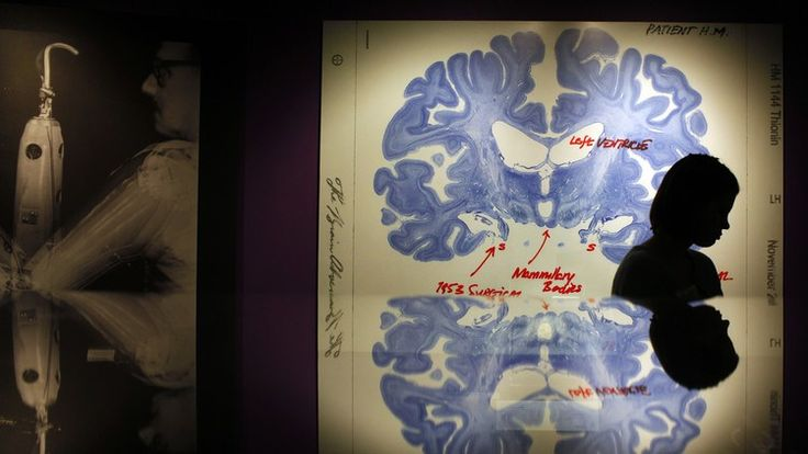 #Los neurobiólogos descubren las posibles causas del alcoholismo - eju.tv: eju.tv Los neurobiólogos descubren las posibles causas del…