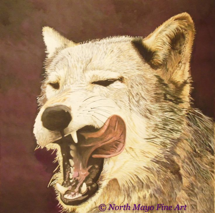 Inktense pencil and block drawing 'Hungry Wolf'