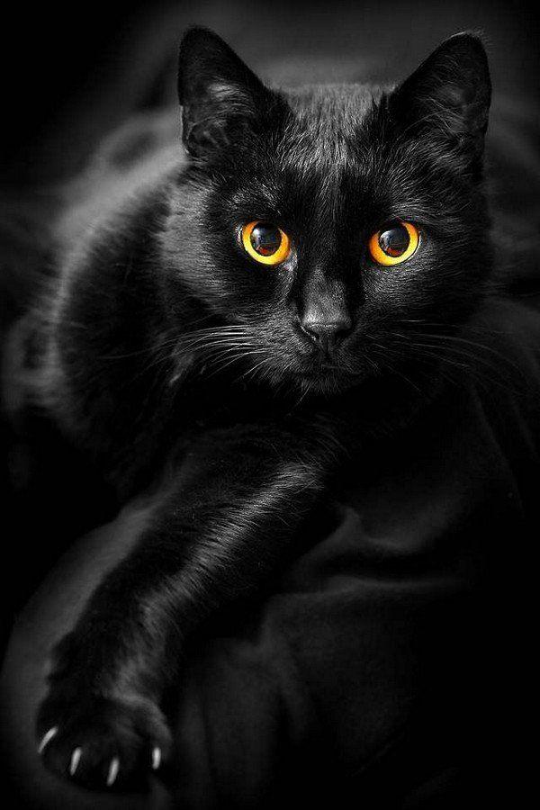 картинки с черной кошечкой гостиницы это значительное