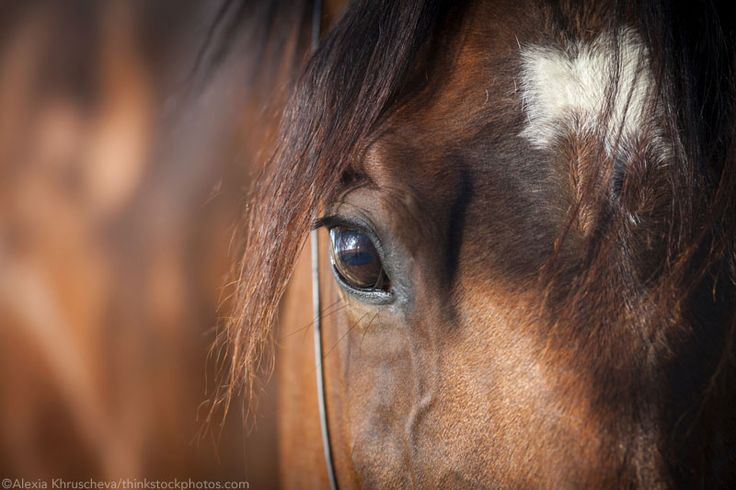 Scientific research backs up some of the old notions about horses' hair patterns.  http://www.horsechannel.com/horse-news/2015/05/what-your-horses-whorl-says-about-him.aspx