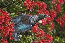 Wilton Otari birdlife
