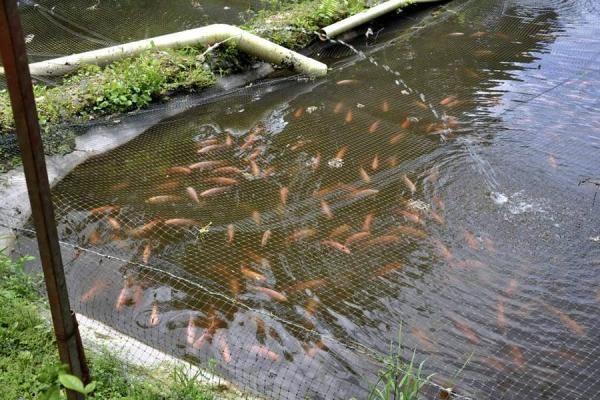 26 best Estanques de peces images on Pinterest Fish farming