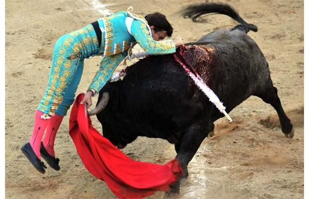 "Spanish bullfighter Julian Lopez ""El Juli"" kills his second bull during a bullfight at Canaveralejo bullring in Cali, department of Valle del Cauca, Colombia, on December 28, 2009."