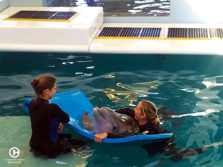 30 best clearwater marine aquarium images on pinterest for Fish tale boats